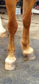 Kenny legs